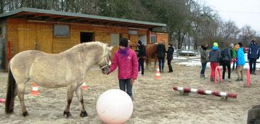 Soziale Kompetenz durch Choaching mit Pferden
