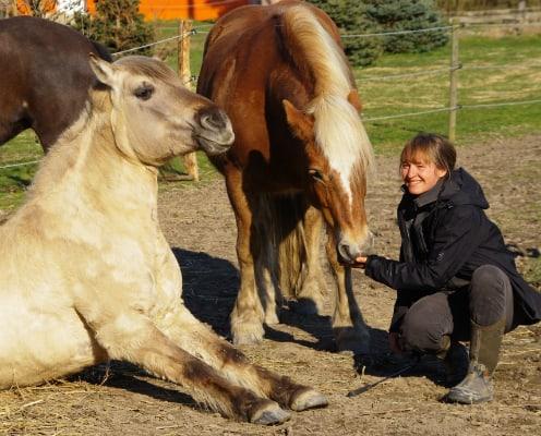Systemisches Coaching mit Pferd in Leipzig